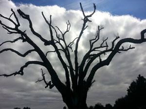 beautiful tree i saw once upon a time.